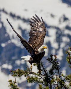Lake Tahoe Tours   Tahoe Photographic Tours